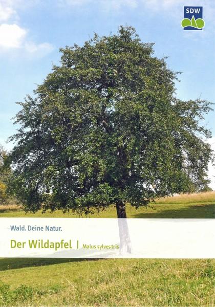 Der Wildapfel