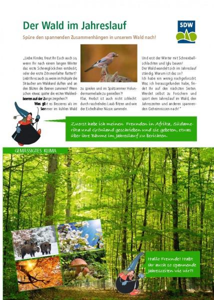 Der Wald im Jahresverlauf