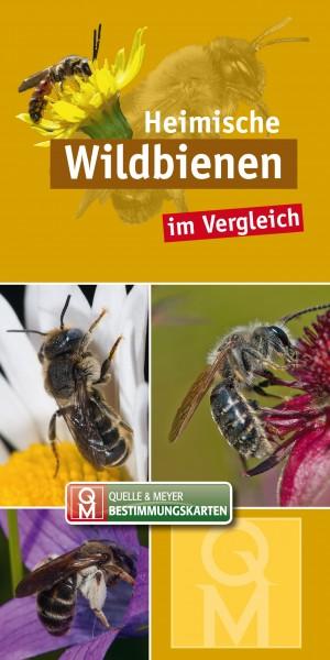 """Bestimmungskarte """"Wildbienen"""""""