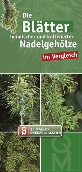 "Bestimmungskarte ""Nadelbäume"""