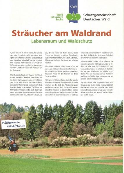 Sträucher am Waldrand