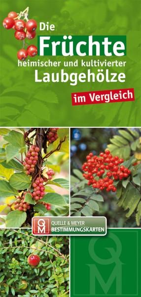 """Bestimmungskarte """"Früchte der Laubgehölze"""""""
