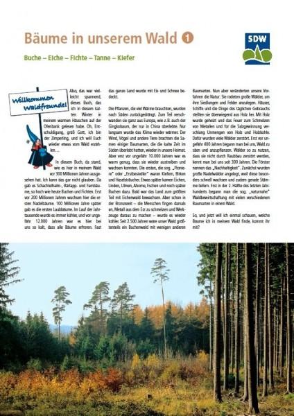 Bäume in unserem Wald 1