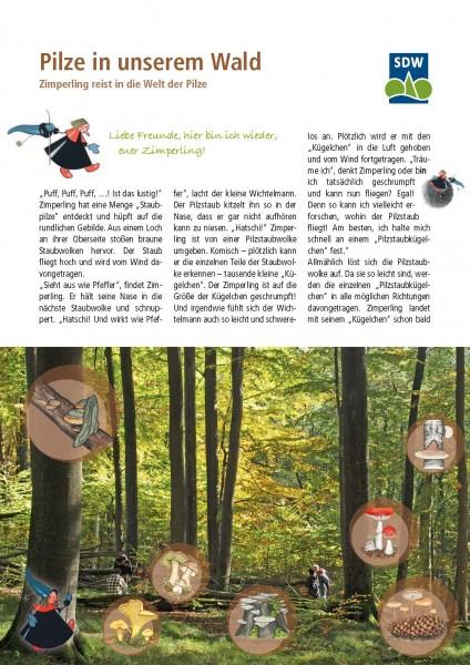 Pilze in unserem Wald