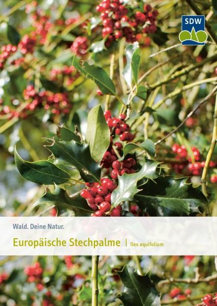 Europäische Stechpalme - Baum des Jahres 2021