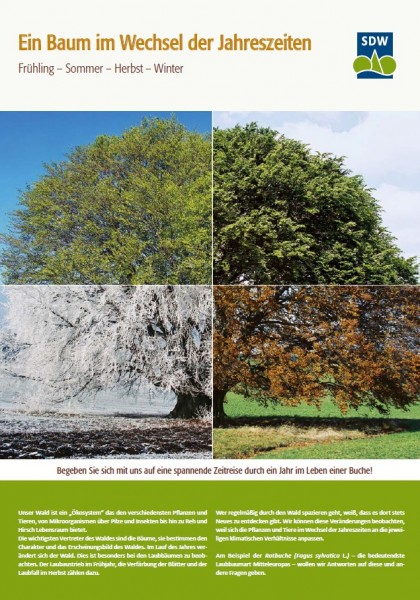Ein Baum im Wechsel der Jahreszeiten